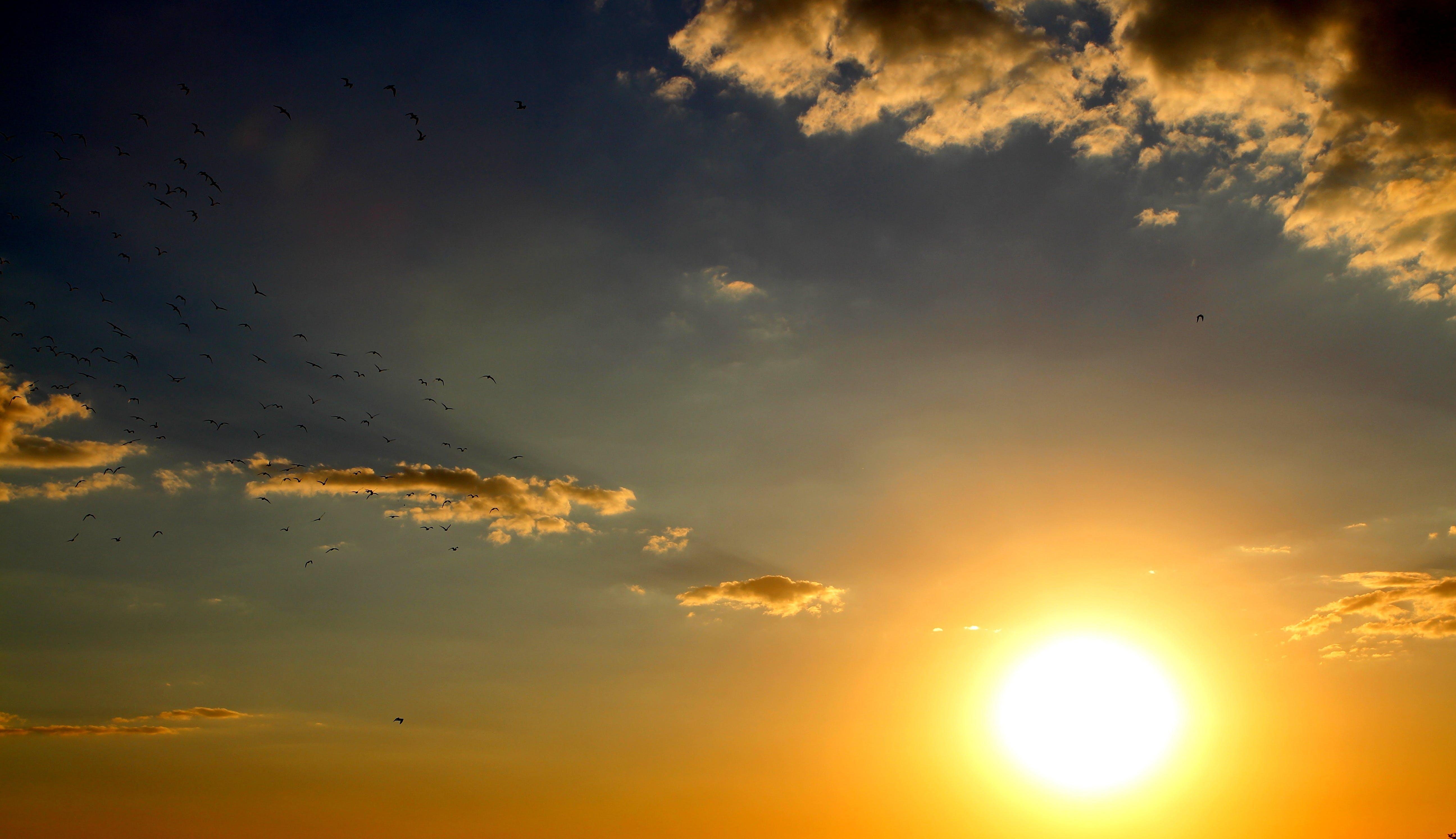 Darmowe zdjęcie z galerii z chmura, jasny, kolor, lato