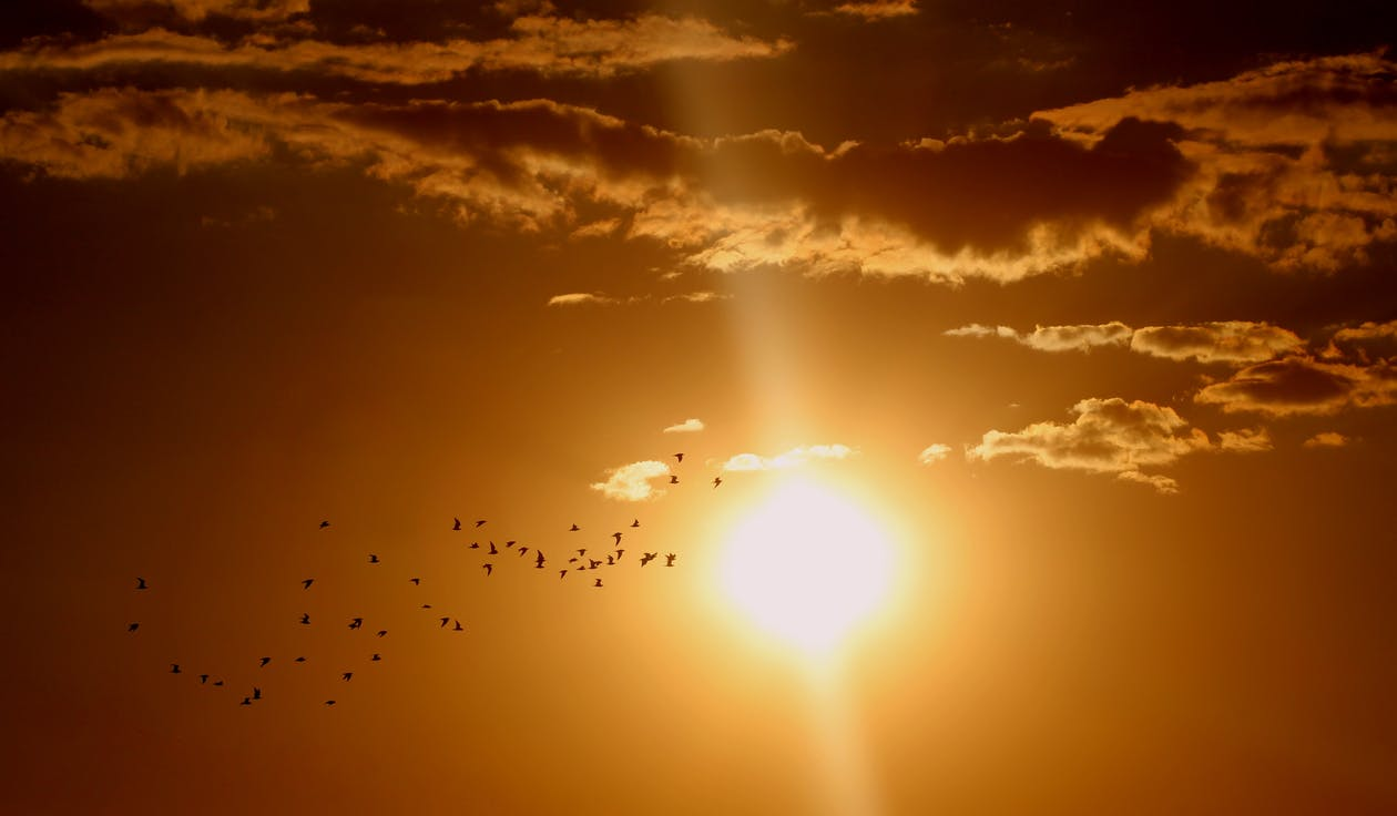 Flock of Birds Flying Under Sun and Clouds