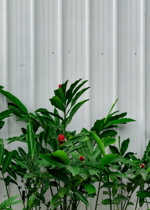 Plants In Front Of White Wall