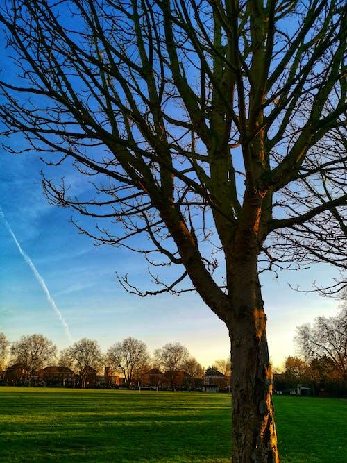 Ảnh lưu trữ miễn phí về bầu trời, bóng, cỏ, kinh ngạc