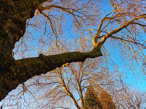 Ảnh lưu trữ miễn phí về bầu trời, cành cây, nâu, nue