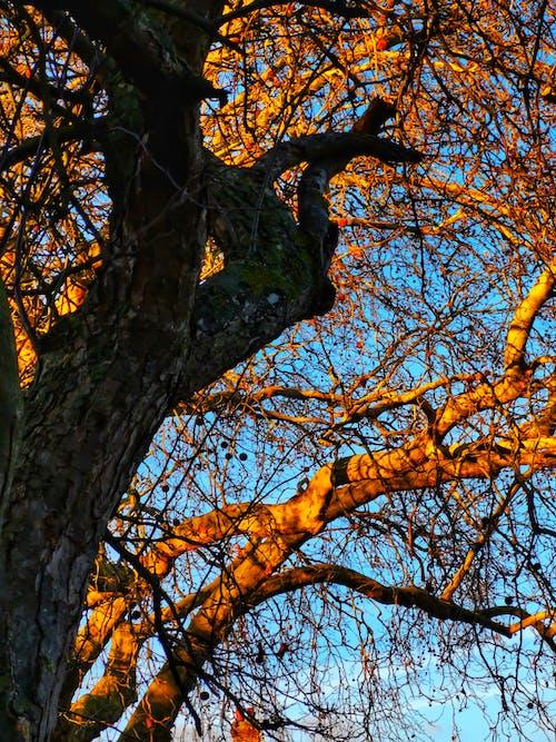 Ảnh lưu trữ miễn phí về bầu trời, cành cây