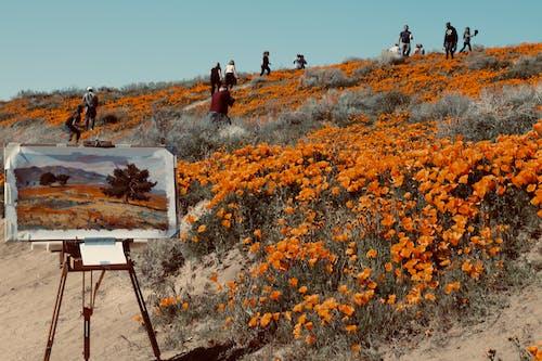 Základová fotografie zdarma na téma barva, cestování, denní světlo, flóra