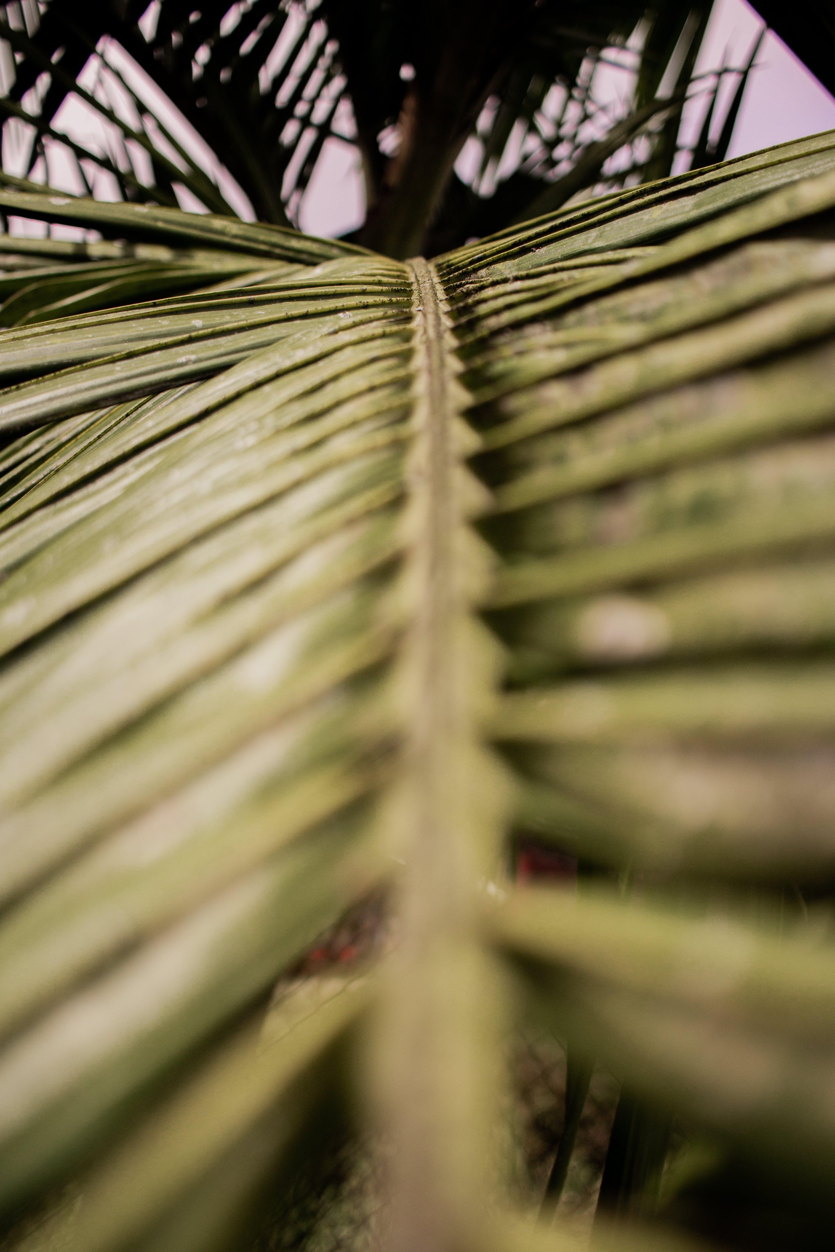 景深, 棕櫚樹葉, 樹, 特寫 的 免费素材照片