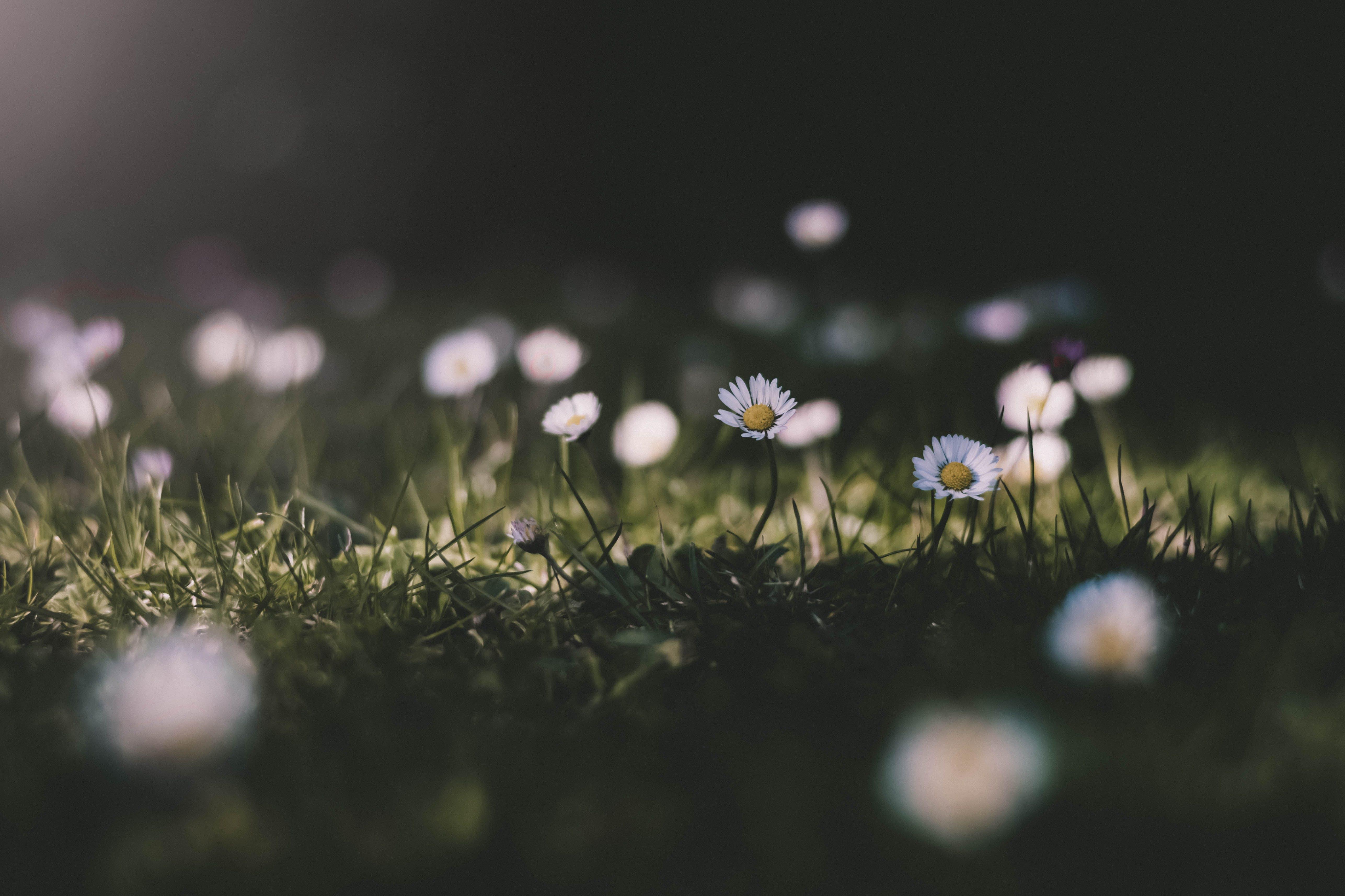 Kostenloses Stock Foto zu blumen, blumengarten, blüte, blütenblätter