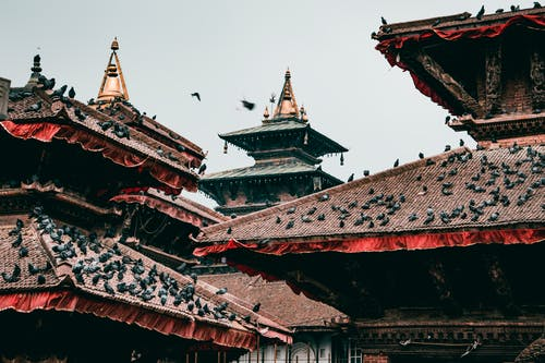 Red and Brown Temple Roofs