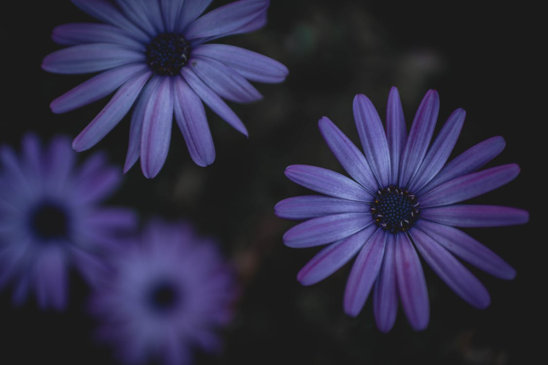 Free stock photo of beautiful flower, beauty in nature, emotion