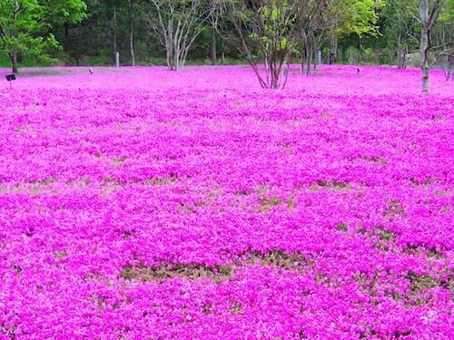 Fotos de stock gratuitas de campo, flora, flores, tokio