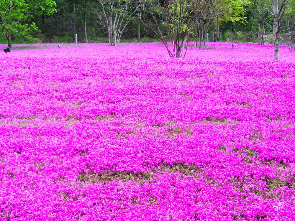 bidang, bunga-bunga, flora