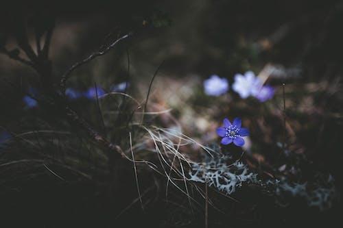 คลังภาพถ่ายฟรี ของ การตัดต่อ, ความงาม, ความงามในธรรมชาติ, ดอกไม้