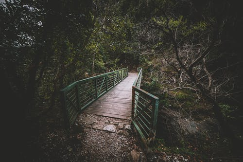 Free stock photo of beauty in nature, bridge, forest