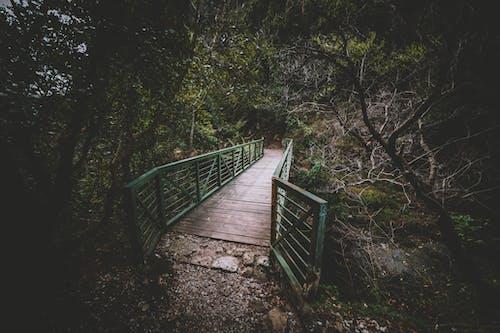 คลังภาพถ่ายฟรี ของ pont, การปีนเขา, ความงามในธรรมชาติ, ธรรมชาติ