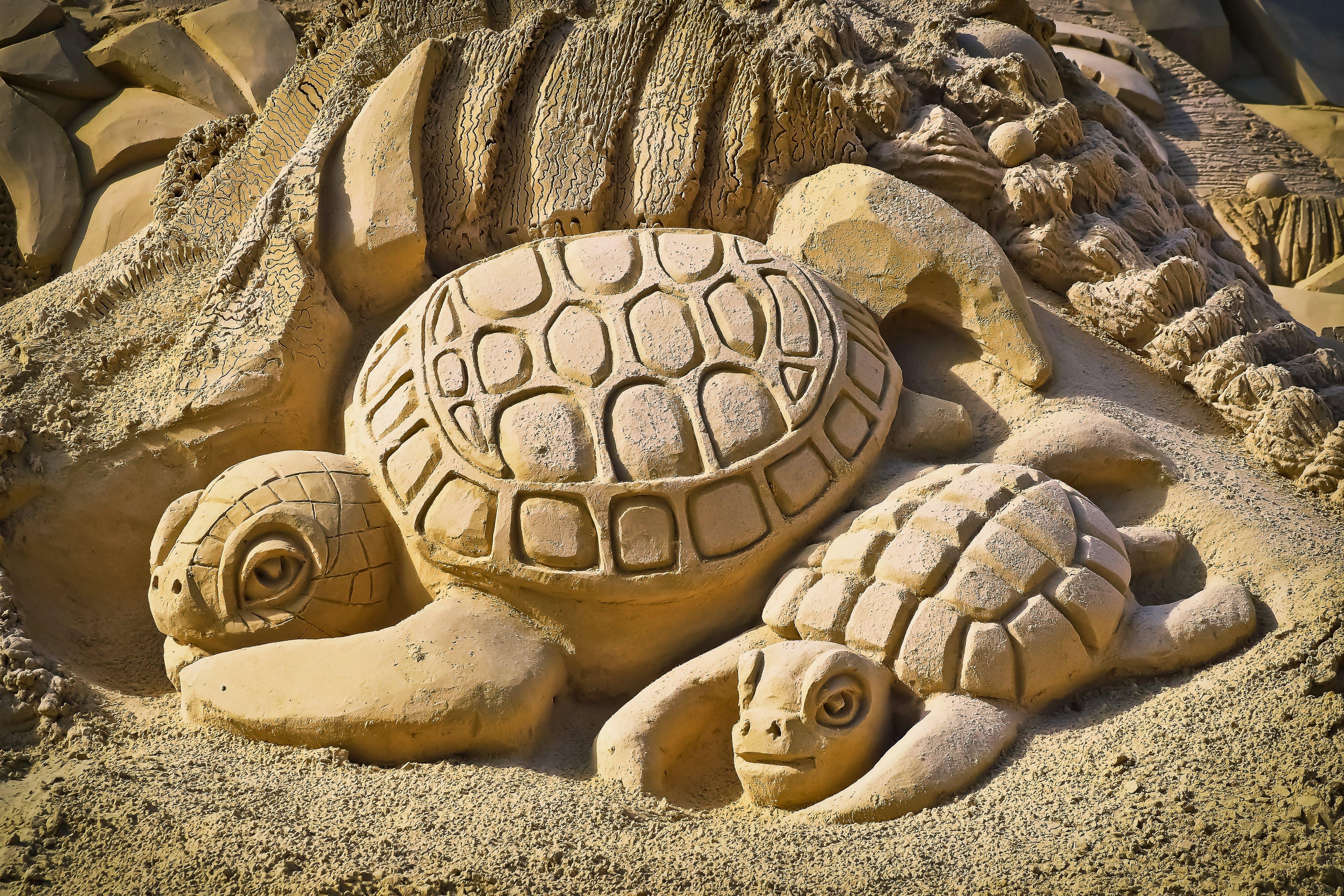 Turtle Sand Art Making