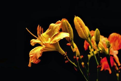 Free stock photo of bloom, flower, garden