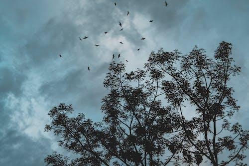 Foto d'estoc gratuïta de arbre mort, Cel fosc, corb, d'humor variable
