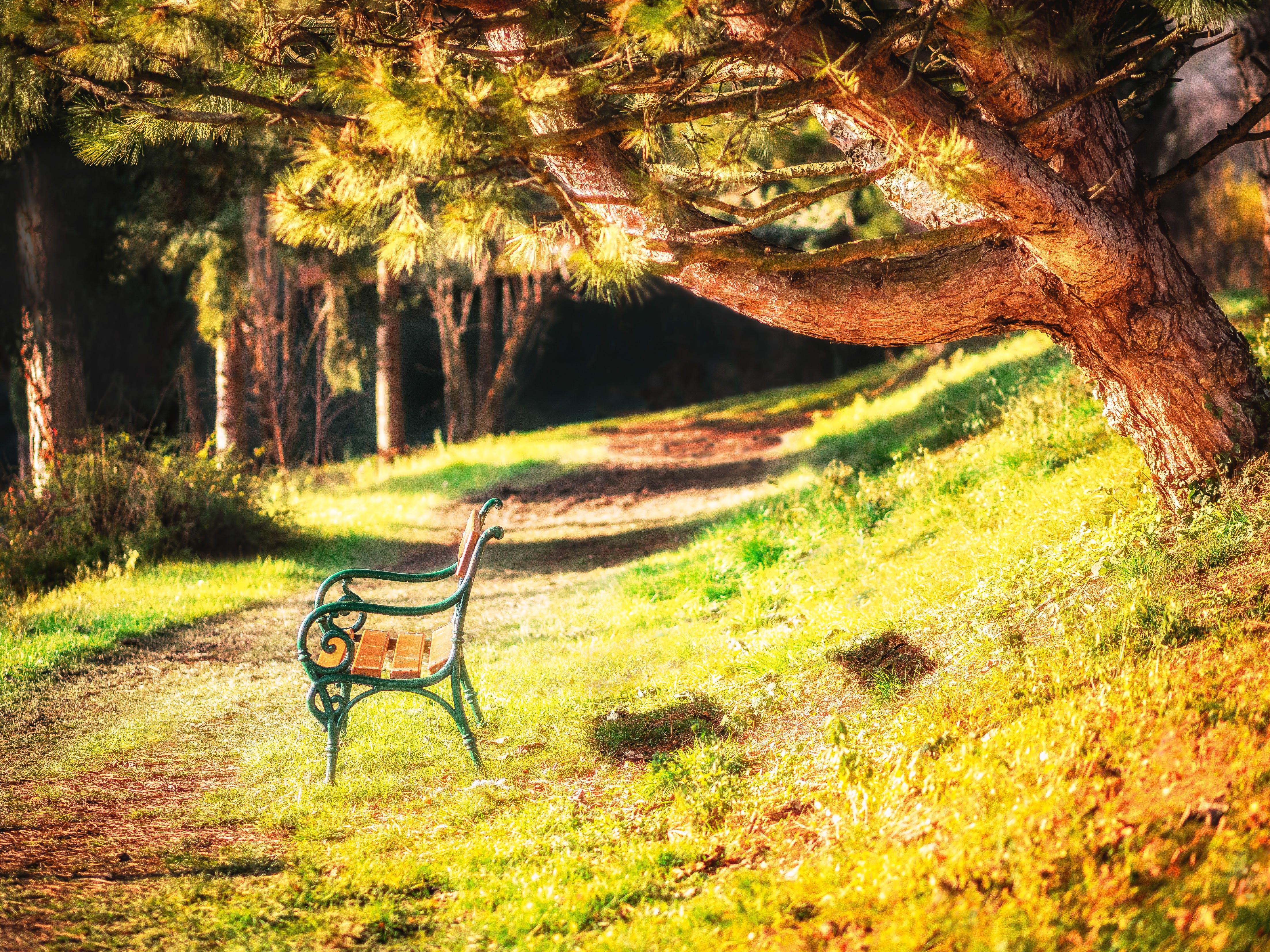 休息, 夏天, 天性, 奧地利 的 免费素材照片