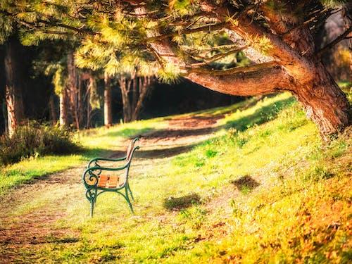 Photos gratuites de arbre, autriche, banc, été