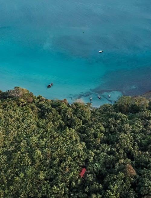 Aerial Photography of Trees and Body of Water
