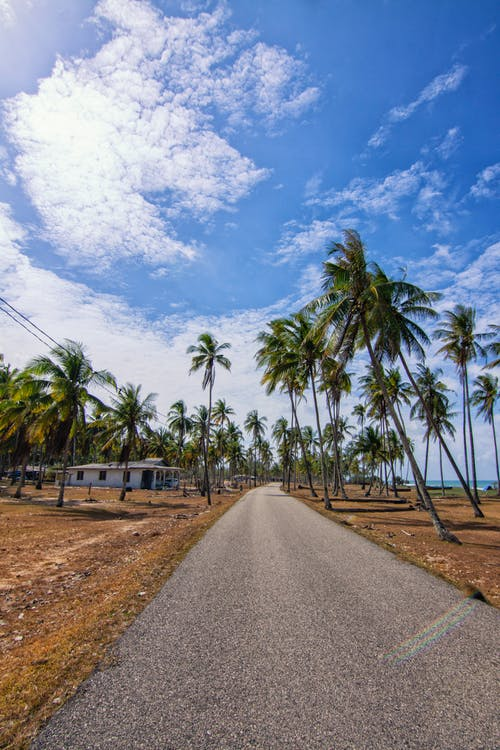 View of a Road Alongside Coconut Trees