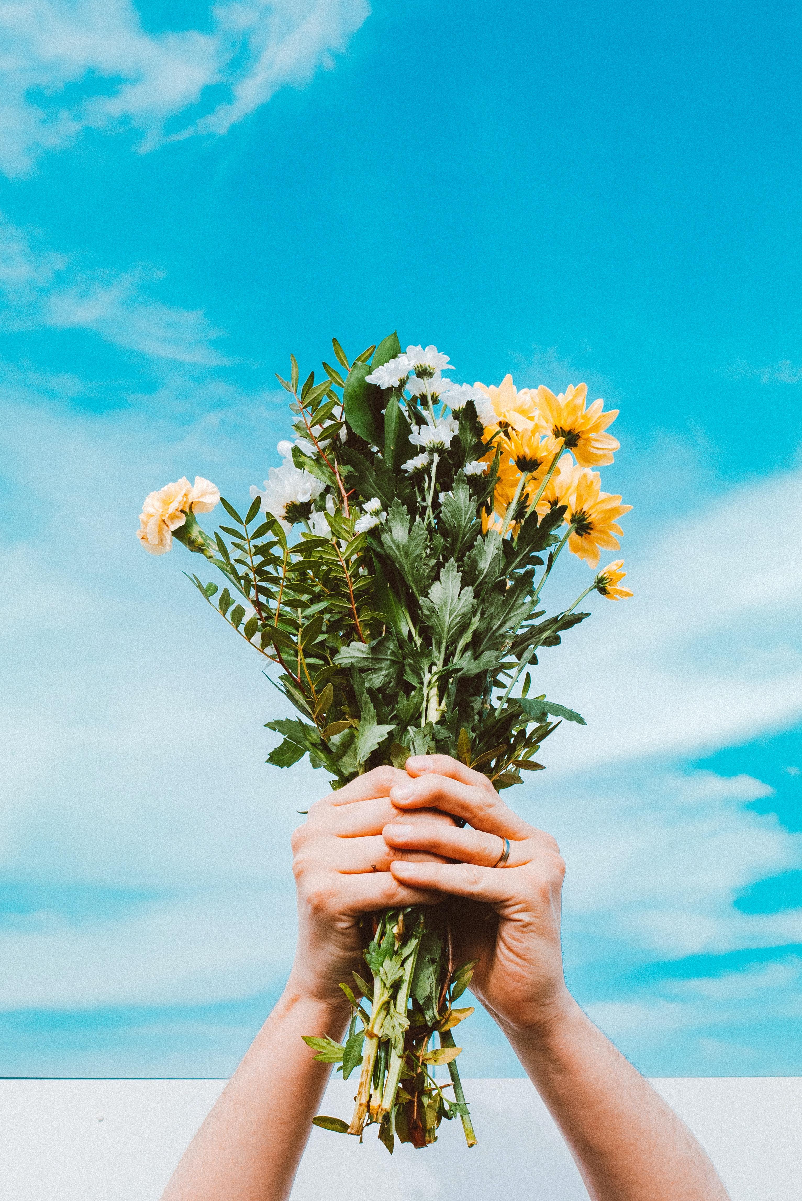 Foto Stok Gratis Tentang Awan Bagus Bunga Bunga