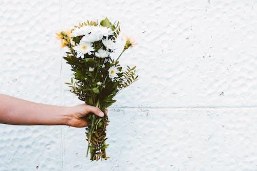Foto d'estoc gratuïta de delicat, flora, flors, flors boniques
