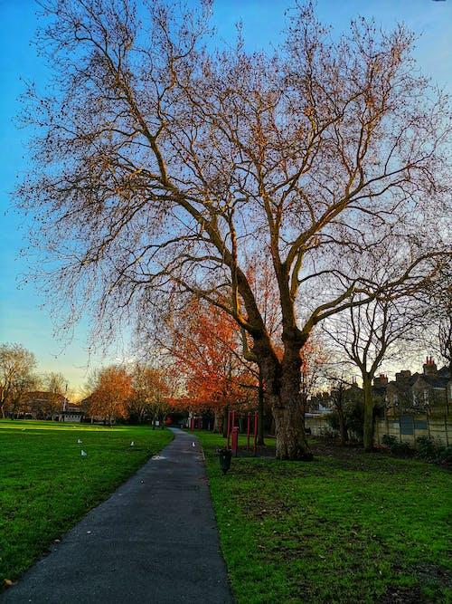 Ảnh lưu trữ miễn phí về bầu trời, cành cây, cỏ, con đường