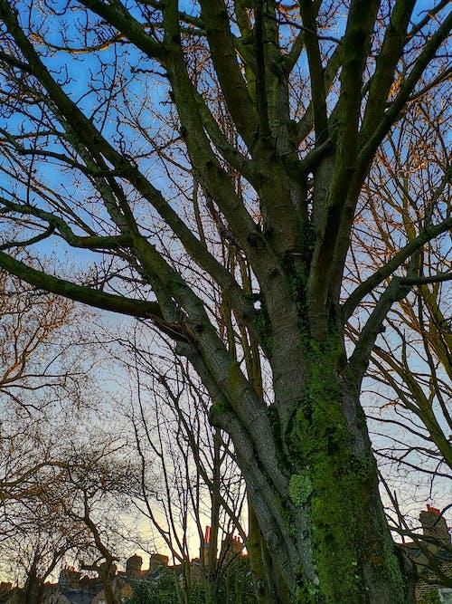 Ảnh lưu trữ miễn phí về bầu trời, cành cây, chụp ảnh ngoài trời