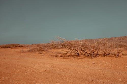 Безкоштовне стокове фото на тему «гарячий, ґрунт, Денне світло, дерева»