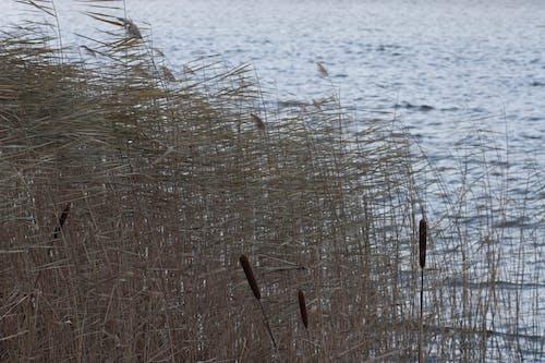 물, 미니멀리스트, 바람, 블루의 무료 스톡 사진