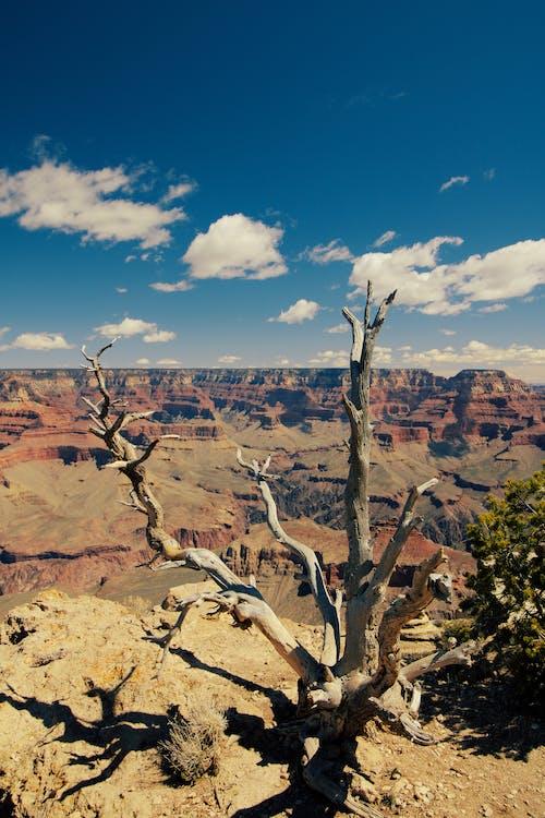 Gratis lagerfoto af arizona, bare træ, bjerg, dagslys