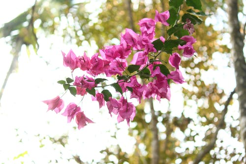 Fotos de stock gratuitas de árbol, bokeh, buganvilla