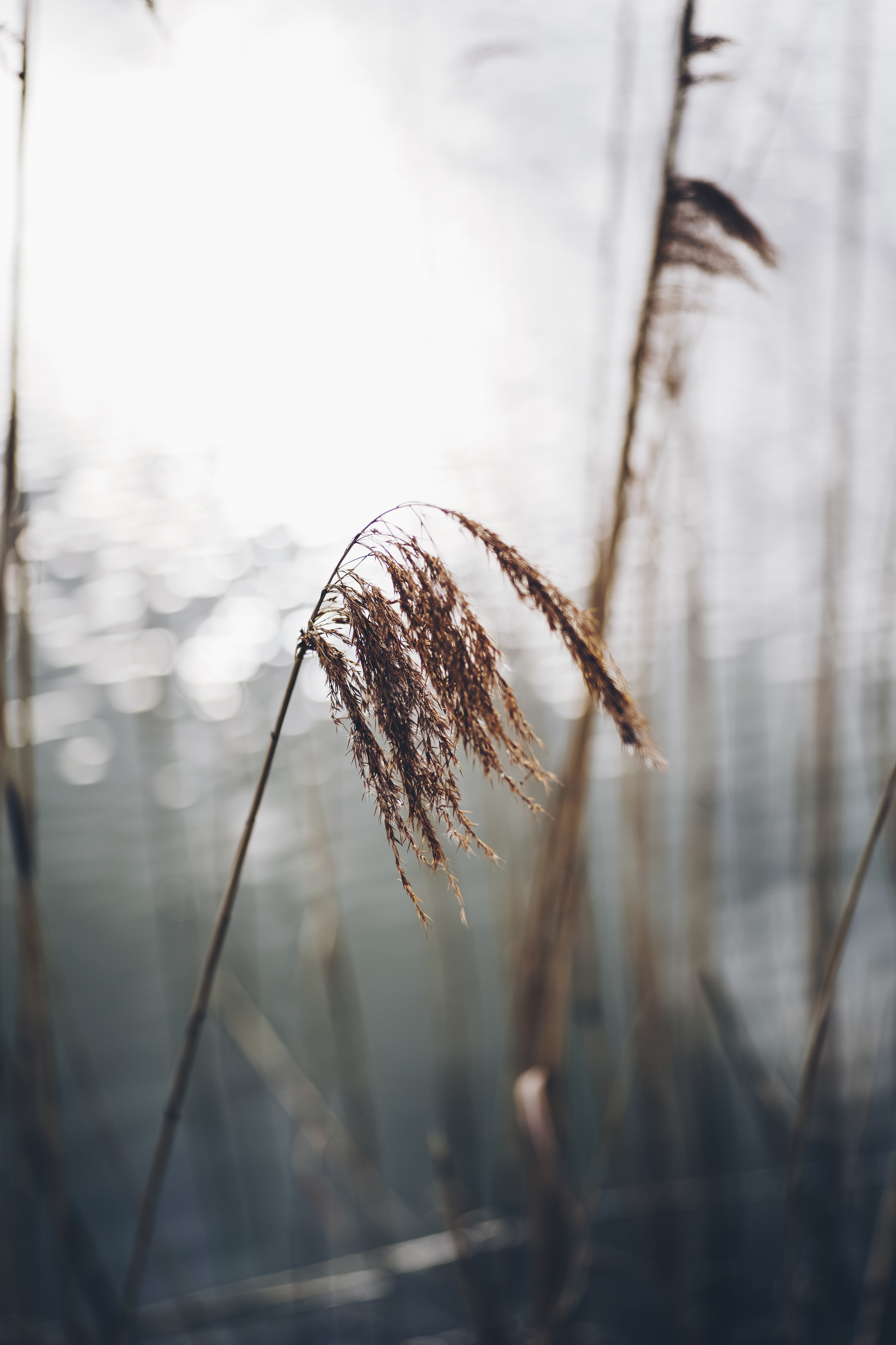View of Brown Grasses
