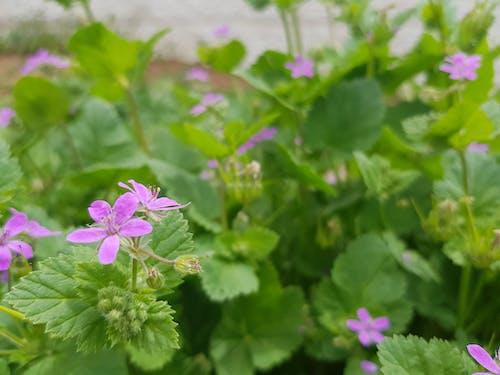 Gratis stockfoto met bloemen in de lente, passieve thema, roze bloemen