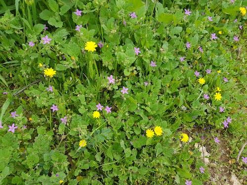 Gratis stockfoto met bloemen in de lente, lente, lentebloem, Pasen