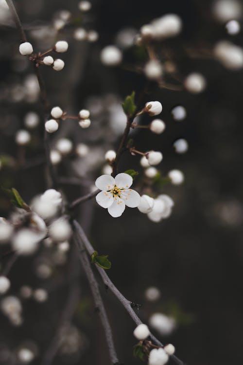 årstid, blomster, blomsterblad