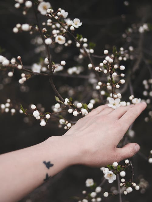 View of Person's Hand Touching White Petal Flowers