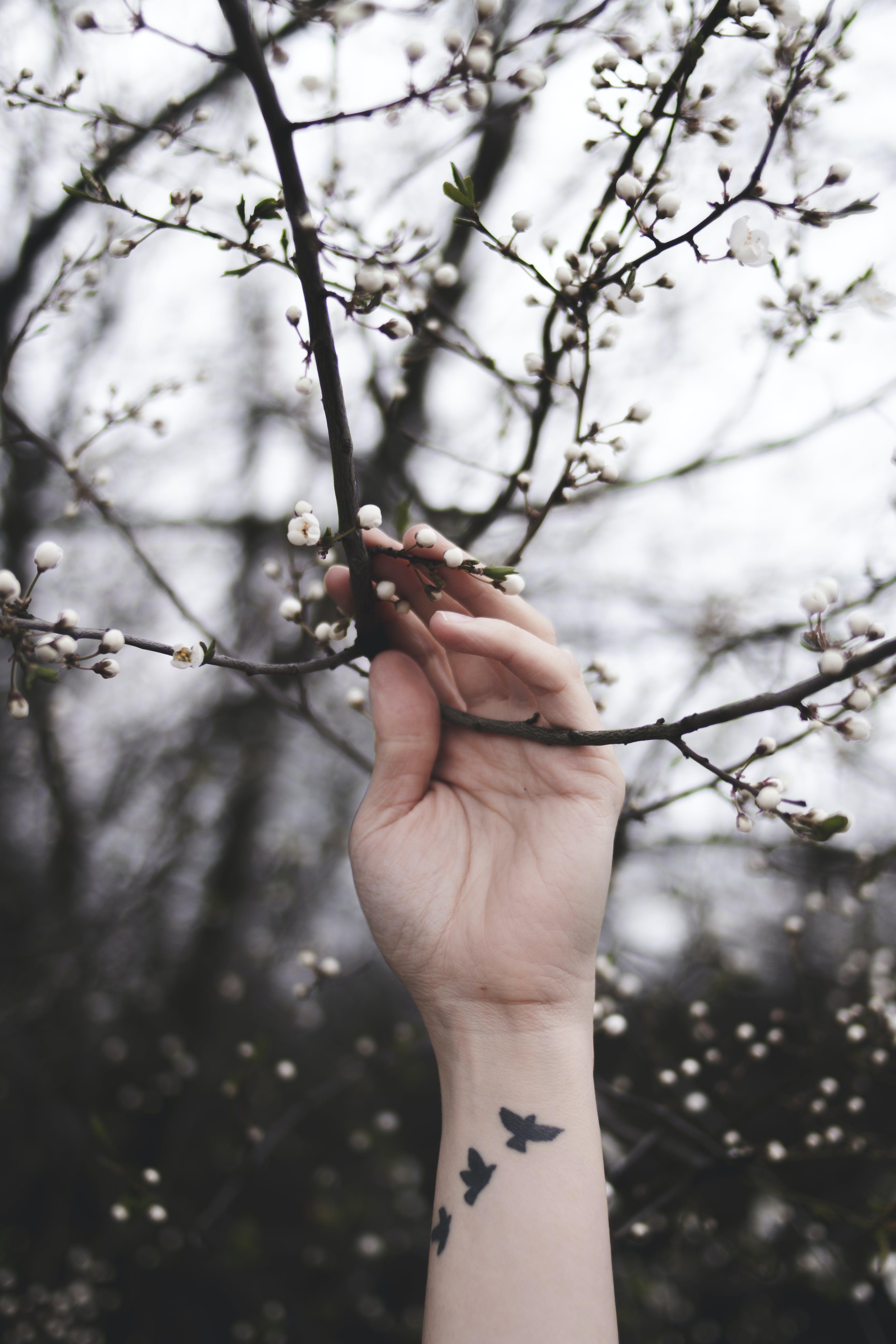 Základová fotografie zdarma na téma dřevo, flóra, jaro, květ