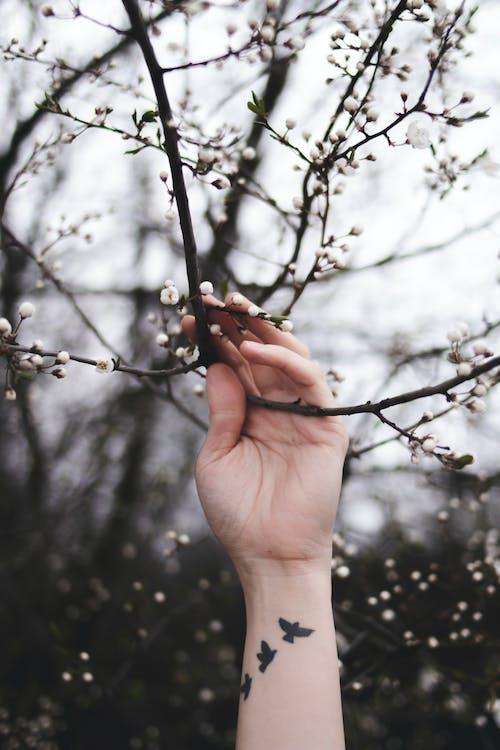 drewno, drzewo, flora