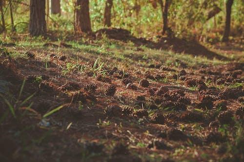 Безкоштовне стокове фото на тему «ґрунт, Денне світло, дерева, Деревина»