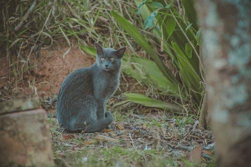 Photo of Short-furred Gray Cat