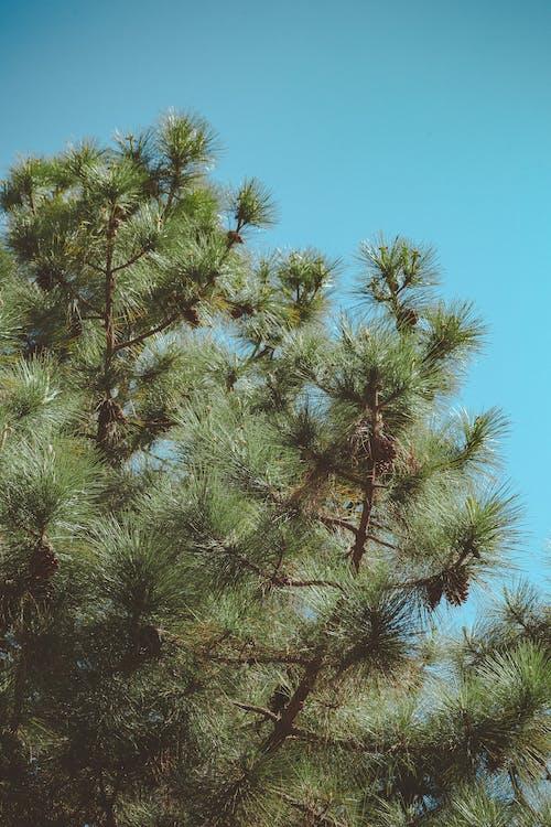 Green-leafed Tree Under Blue Sky