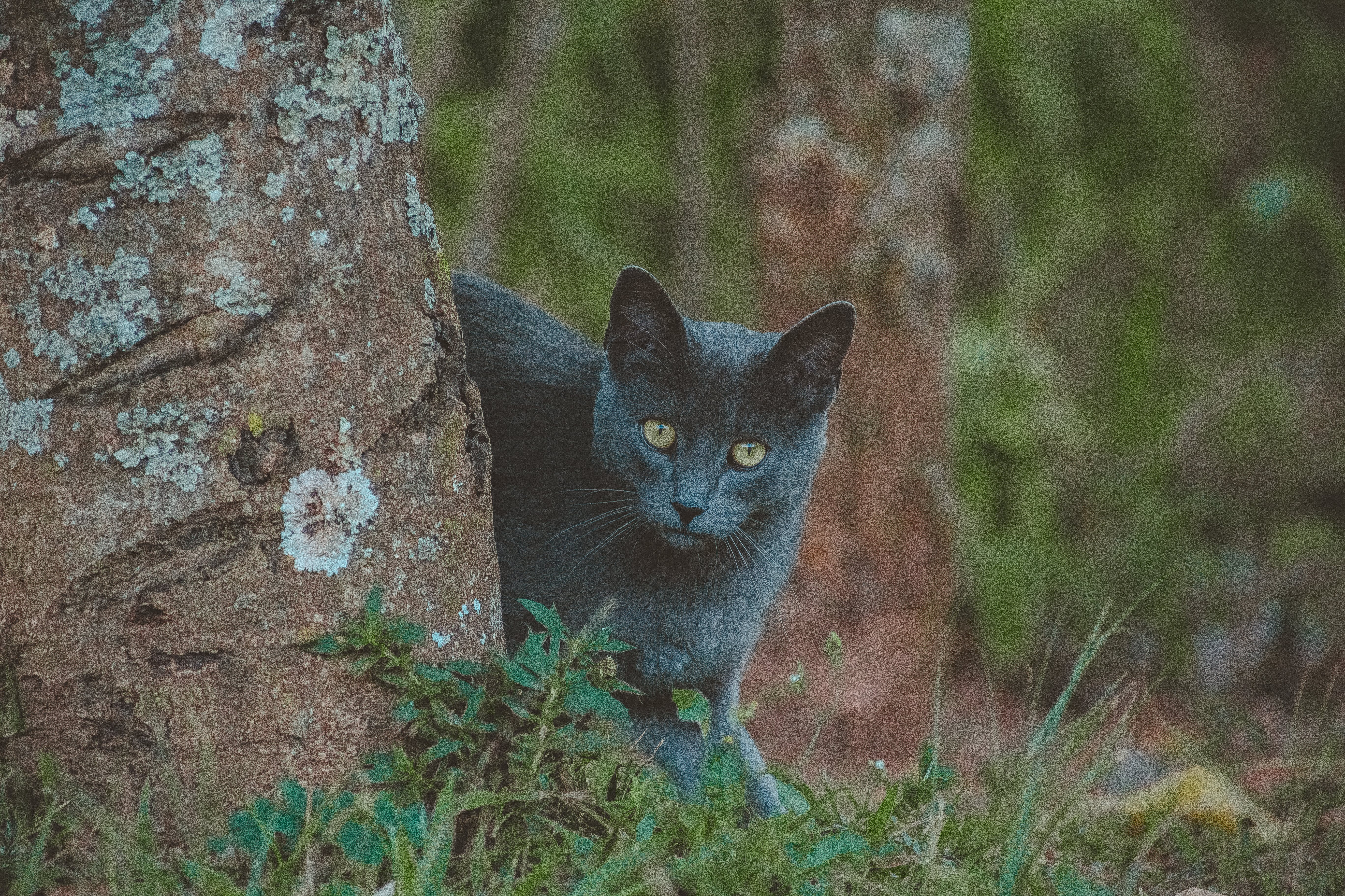 Photo of Gray Cat Standing Behind Tree