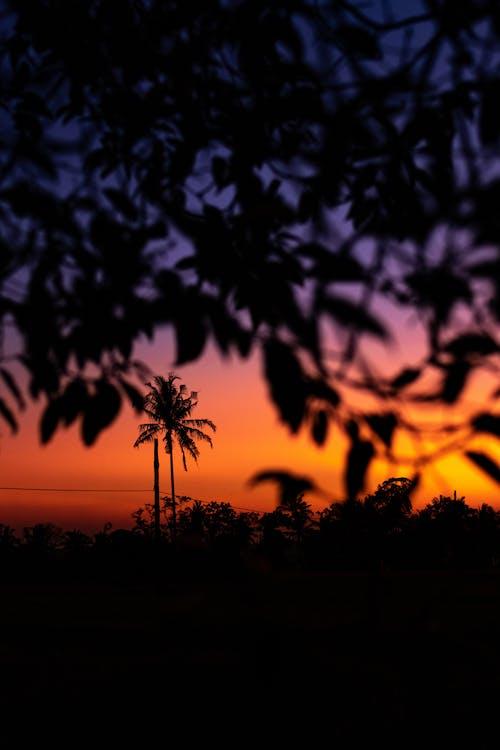 Fotobanka sbezplatnými fotkami na tému Bali, exteriéry, farba, krajina
