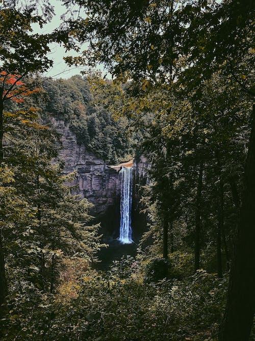 Gratis lagerfoto af dagslys, flod, grøn, landskab