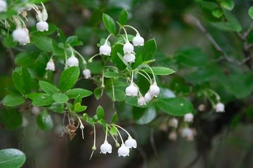 Darmowe zdjęcie z galerii z biały, delikatny, kwiaty polne