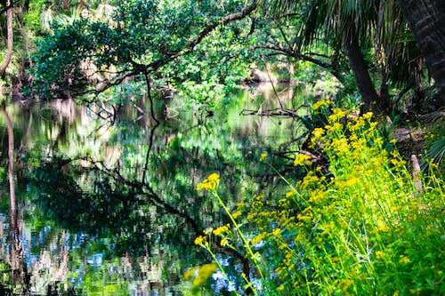 Darmowe zdjęcie z galerii z kwiaty polne, rzeka, żółty