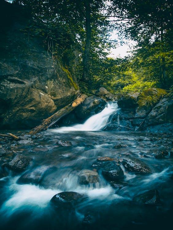 bäck, dagsljus, flod