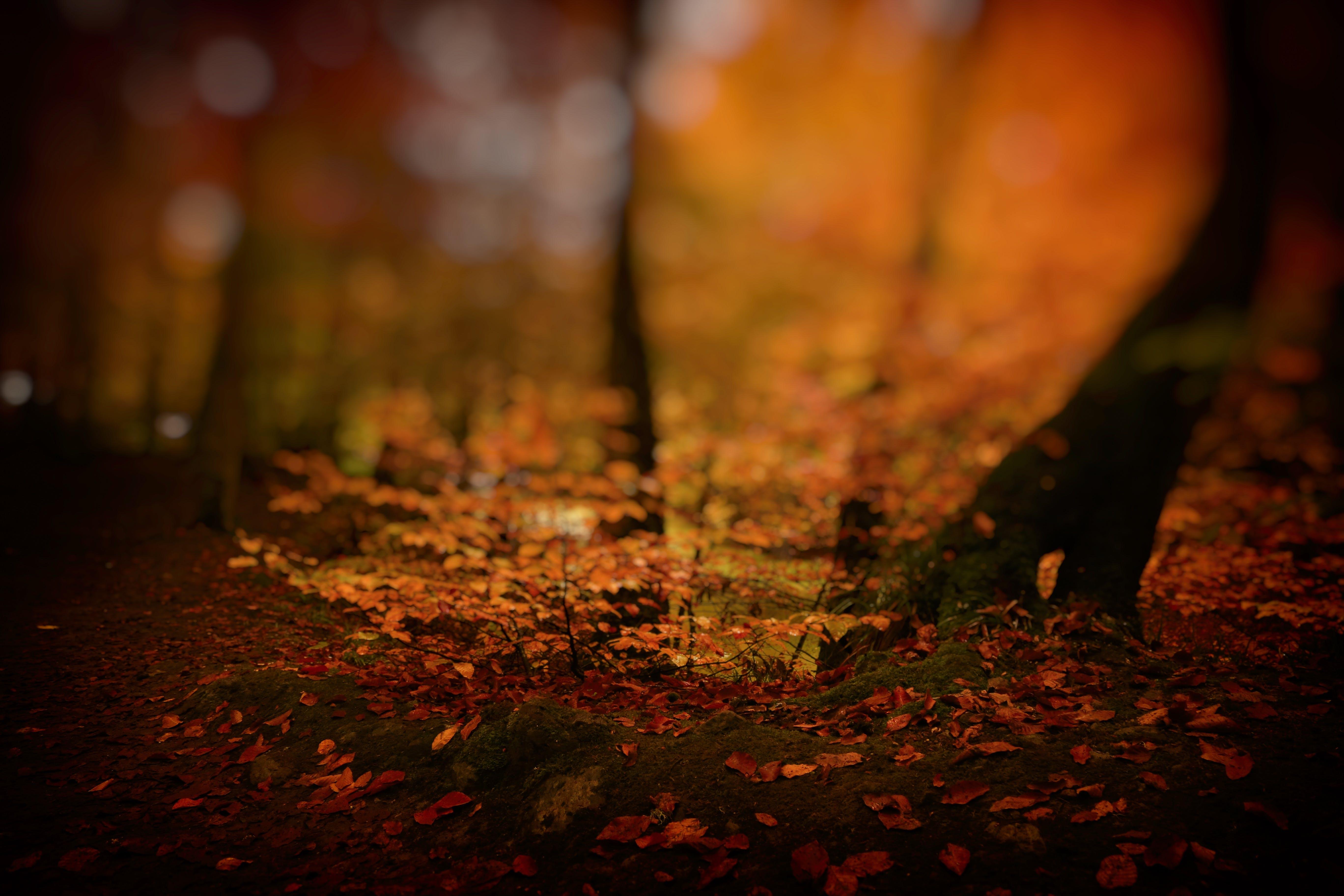 Foto stok gratis alam, alami, batang pohon, batu
