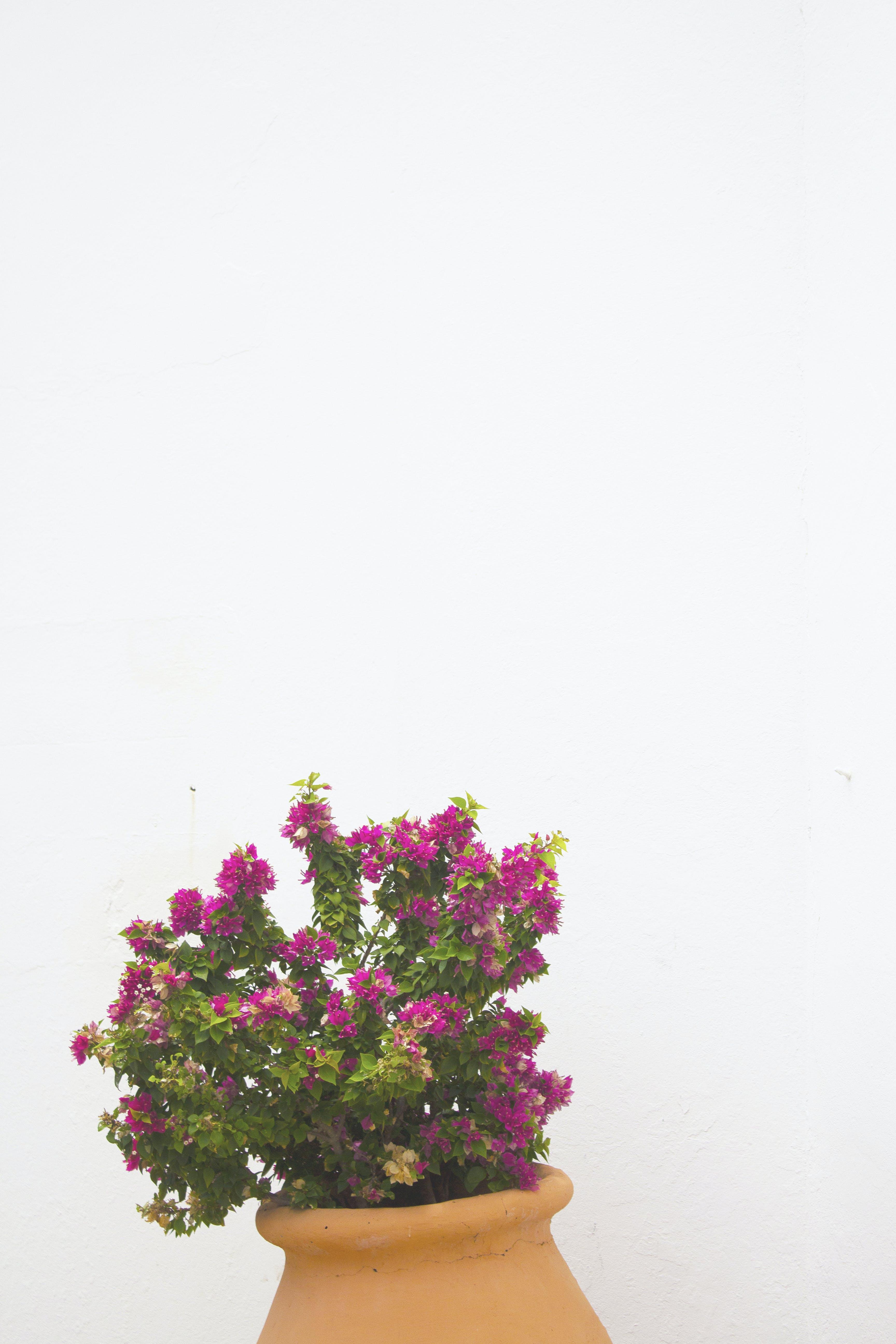 Foto stok gratis bunga-bunga, bunga-bunga merah muda, di luar rumah, dinding