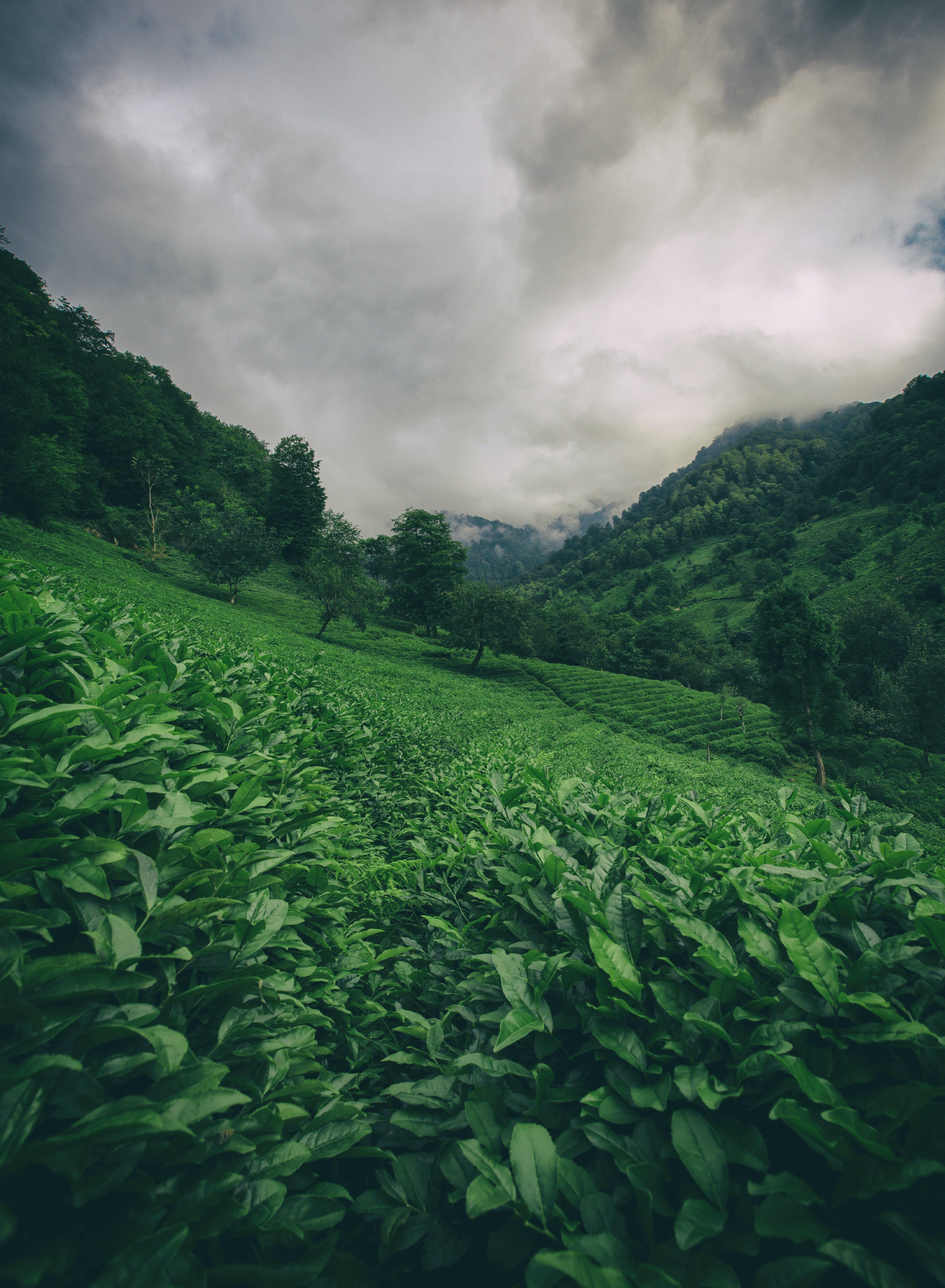 Gratis lagerfoto af agerjord, bane, dagslys, græs